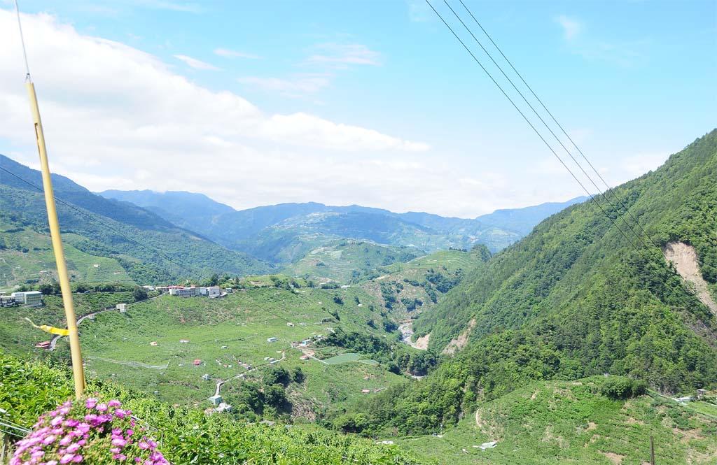 Li Shan Oolong Tea Plantion